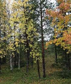 Skog höst